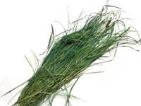 Зубровка трава 100 грамм