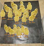 Коврик из линолиума для обогрева цыплят,40х50 см,двухсторонний с регулятором