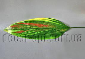 Лист Хосты трехцветный  39х13 см