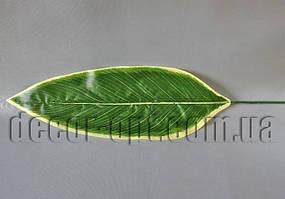 Лист Хосты зелено-салатовый  39х13 см