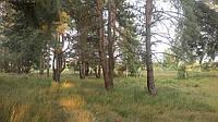 Элитные участки в лесу и озера Глеваха