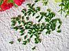 Бусины рис зелёные 10 грамм