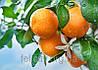 Ароматизатор со вкусом Апельсина 10мл