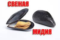 Свежие мидии в Одессе