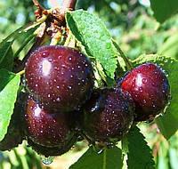 Ароматизатор со вкусом Черной вишни10мл