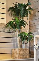 Искусственное растение Драцена