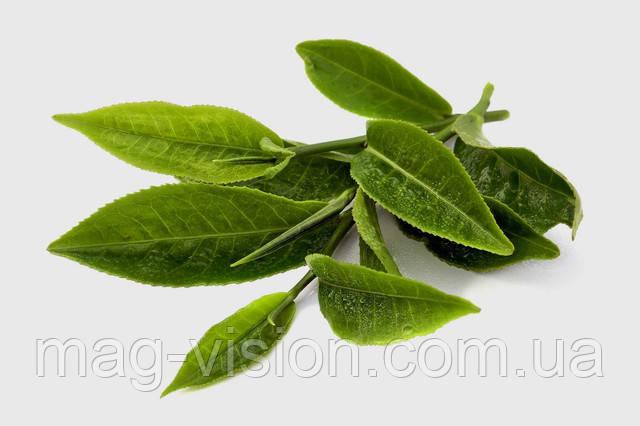Зеленый чай содержит огромное количество веществ, которые препятствуют формированию свободных радикалов в организме, защищая мембраны клеток от повреждения, снимают спазм кровеносных сосудов, снижают риск ишемической (коронарной) болезни сердца