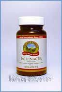 Echinacea (Эхинацея)