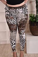 Леопардовые лосины больших размеров 011 48-74