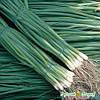 Насіння Цибуля Шашлична (на зелень) 1г