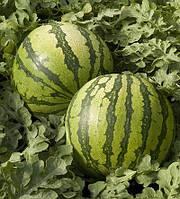 Колумбія насіння кавуна типу Крімсон Світ Садиба Hem Zaden 5 насінин