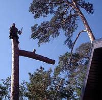 Удаление аварийных деревьев (063) 2372737 в Киевской обл.
