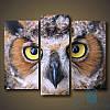 Модульная картина Сова с желтыми глазами из 3 фрагментов