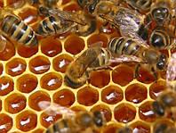 Мед-разнотравье