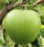 Купить яблоки Гренни Смит , фото 1