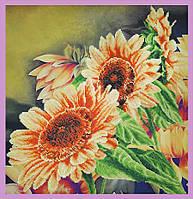 Цветы солнца P-255