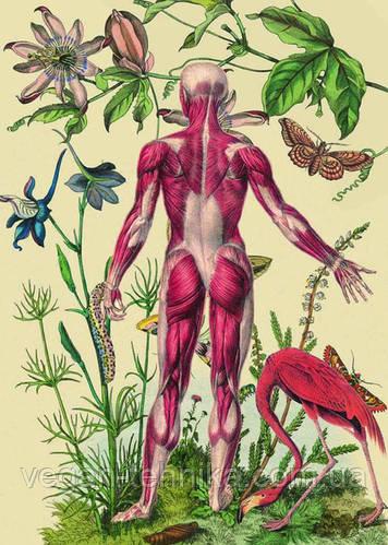 Кожных заболеваний НЕТ! Какие болезни проявляются на коже
