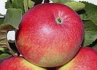 Яблоки Элиза цена, фото 1