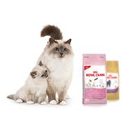 Royal Canin сухой корм для кошек