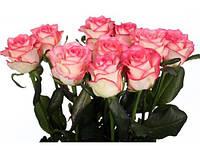 Роза Джумилия 90 cм