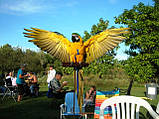 Шлейка для попугая (большой). Ара, какаду, фото 2