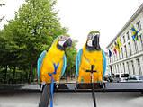 Шлейка для попугая (большой). Ара, какаду, фото 3