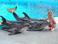 Поездки в Кирилловку дельфинарий