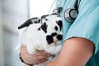 Какие бывают болезни у кроликов и как их лечить?