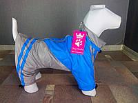 Дождевик MN-1 размер 2(XS)(24см) Dogs Bomba