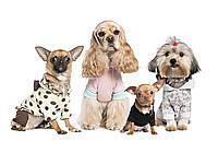 Dress dog - одежда для мелких пород (18-36см)