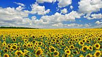 Вплив пестицидів та агрохімікатів на бджільництво