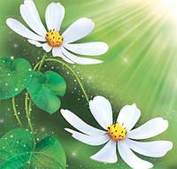 Фотообои с цветами Космея размер 140 х 145 см