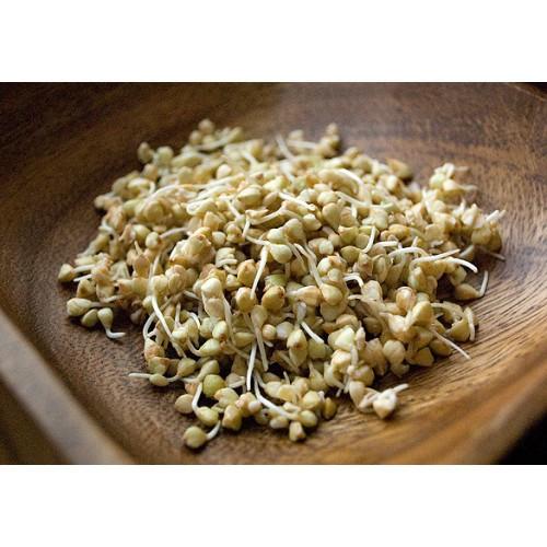 Проростки гречки – маленькие зернышки с уникальными свойствами
