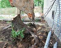 Удаление деревьев харьков