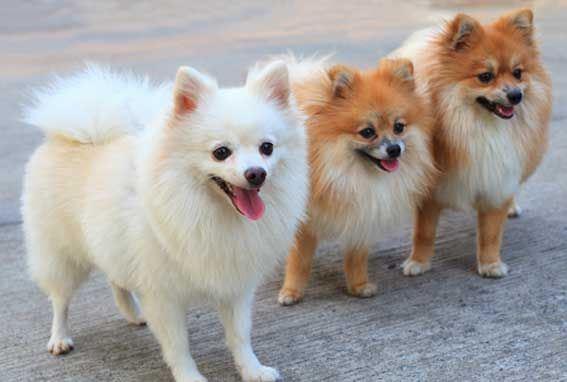 фото щенков миниатюрных размеров