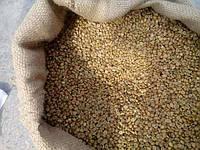 Зеленый Кофе Робуста  Cherry AA мытый (Индия) - Кофе оптом (опт) CoffeeOpt