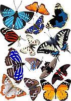 Бабочки ассорти 1 Вафельная картинка