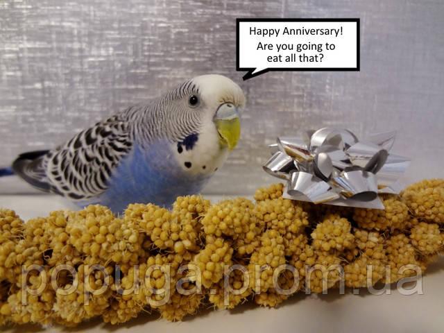 Основы питания попугаев