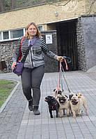 Инструктор по вязке собак, искуственное осеменение собак