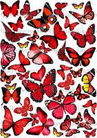 Печать съедобного фото - Формат А4 - Вафельная бумага - Бабочки №8