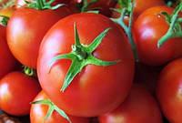 Насіння томату Берил F1 1000 насінин Rijk Zwaan, фото 1