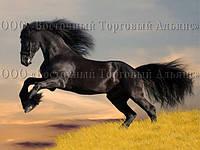 Печать съедобного фото - А4 - Вафельная бумага - Лошадь №2