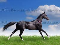 Печать съедобного фото - А4 - Вафельная бумага - Лошадь №4