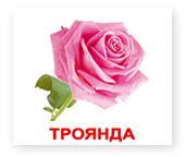 Картки великі українською мовою. ЛАМІНОВАНІ