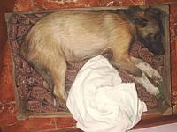 Ветеринар (093)408-09-36. Ущемление нерва у собак