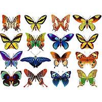 Бабочки ассорти 12 Вафельная картинка