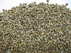 Эспарцет семена фасовка 500г