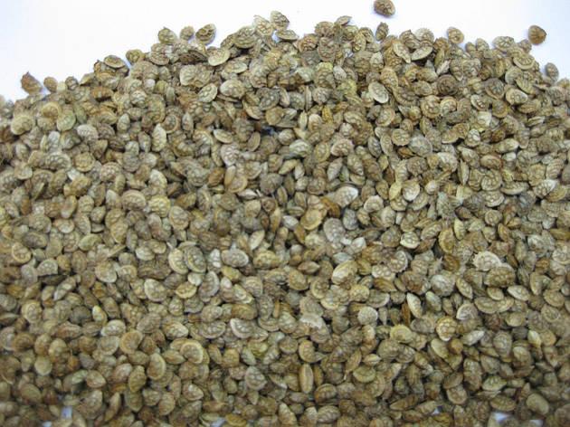 Эспарцет семена , фото 2