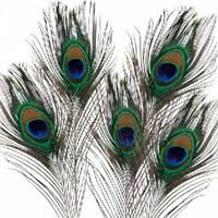 Перья павлина,натуральное перо,5 шт