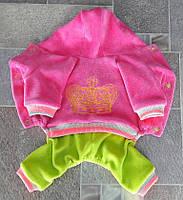 Велюровый костюм Dogs Bomba 28см для собак D-9 размер-3(XS2)